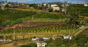В Минсельхозе Абхазии рассказали об ущербе в связи с наводнением в республике
